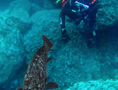 Madeira – Scuba Diving